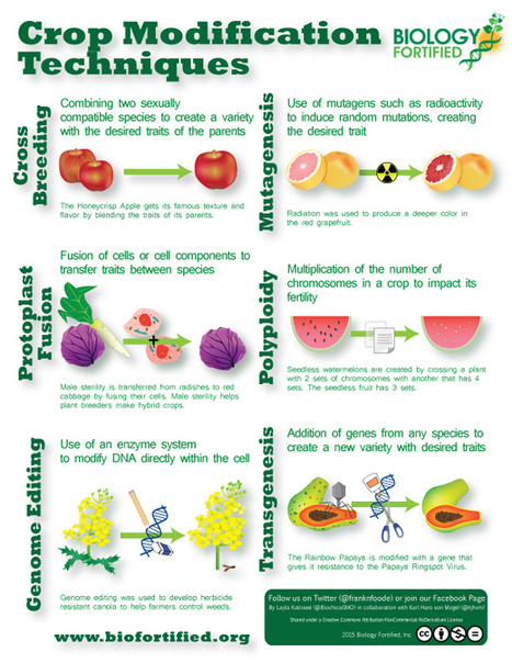 ¿Has comido alguna de estas plantas manipuladas genéticamente? | Genética cotidiana | Scoop.it