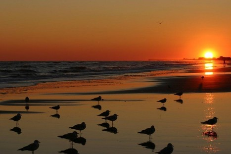 Best Vacation Beach House Deals on Outer Banks   Outer Banks Neighborhoods   Everything OBX   Scoop.it