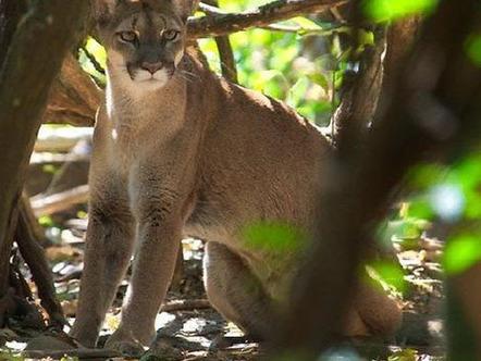 Costa Rica: Es el único país de latinoamérica que prohíbe la caza ... | Un poco del mundo para Colombia | Scoop.it