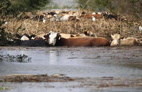 Pourquoi l'humanité va manquer de nourriture | La fin de l'eau facile | Scoop.it