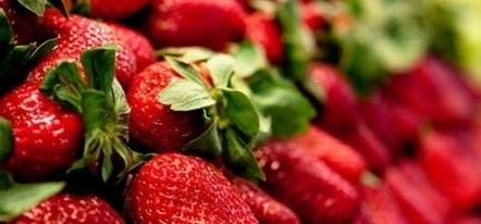 Le faible prix des fraises espagnoles indigne les producteurs français | agro-media.fr | Actualité de l'Industrie Agroalimentaire | agro-media.fr | Scoop.it