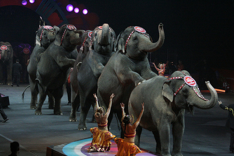 A Look At Where Ringling Bros. Are Sending Its Retired Elephants | Nature Animals humankind | Scoop.it