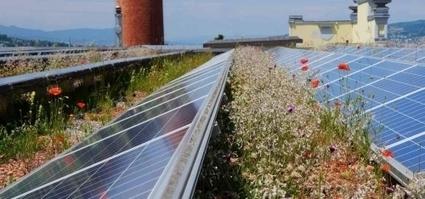 Biodiversité, photovoltaïque : réveillons les énergies qui sommeillent sur nos toits ! | Economie Responsable et Consommation Collaborative | Scoop.it