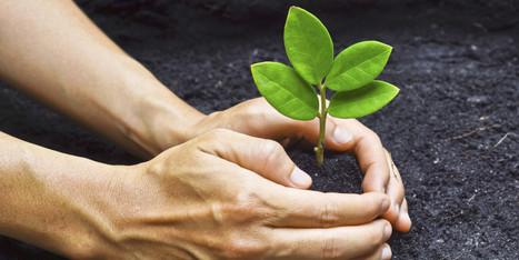 L'Université Laval offrira une formation en ligne sur le développement durable | Comment je fais du développement  durabledans mon entreprise? | Scoop.it