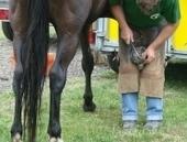 Manual y vídeo de herrado en equinos | Enriquecimiento ambiental en animales en cautividad y mascotas. | Scoop.it