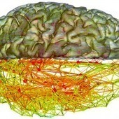 The Unlikely Network at the Core of Your Brain's Internet - Wired | Peer2Politics | Scoop.it