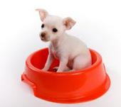 Bunny's Blog: Dogington Post Releases Kosher for Passover Dog Food List | Pet News | Scoop.it