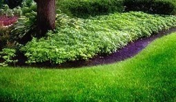 Lawn Care Charlotte NC - Proformance Turf | Home Improvement Guides | Scoop.it