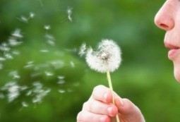 Hay Fever Help: Homeopathic Treatment and Other Self-help Tips - Homeopathy Plus   mytexasent   Scoop.it