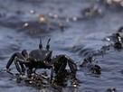 Polluted Ocean Photos -- National Geographic | Escribir en ingeniería | Scoop.it