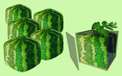 Molds for square and heart shape watermelon | Fruit Mould | Scoop.it