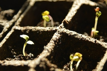 Veggies to Mars   Réseau Tela Botanica   Scoop.it