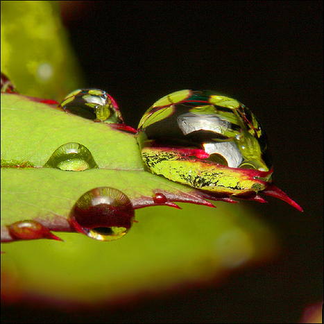 Dominate Macro Photography With These 7 Short Tutorials | photography | Scoop.it
