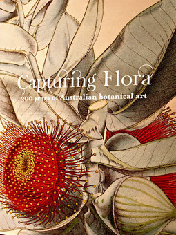 Capturing Flora: 300 Years of Australian Botanical Art | Australian Plants on the Web | Scoop.it