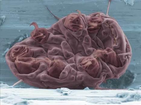 Extrémophiles   EntomoScience   Scoop.it