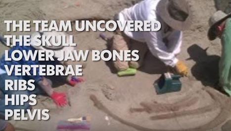 Archéologie: un crâne de T-Rex bien préservé découvert | Histoire et Archéologie | Scoop.it