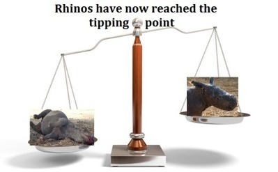 'Tipping Point' for Rhinos | GarryRogers NatCon News | Scoop.it