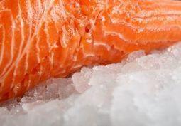 FAO GLOBEFISH: Market Reports - Salmon, September 2013 | aquaculture nutrition | Scoop.it