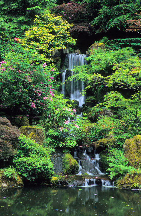 Portland Japanese Garden Reopens March 1 | Japanese Gardens | Scoop.it