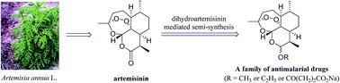 Artemisinin, a miracle of traditional Chinese medicine | Natural Products Chemistry Breaking News | Scoop.it