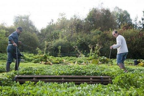 À Veyres-sur-Essonne, la tradition du cresson - Ministère de l'agriculture, de l'agroalimentaire et de la forêt | Agriculture urbaine, architecture et urbanisme durable | Scoop.it