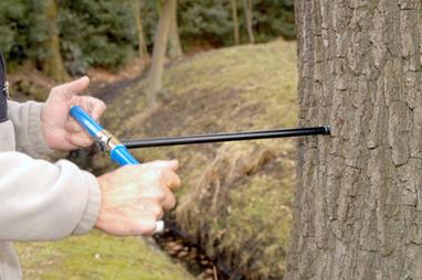 Quand les anneaux des arbres racontent les pollutions passées   Toxique, soyons vigilant !   Scoop.it