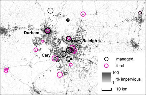 L'urbanisation augmente l'impact des agents pathogènes sur les abeilles | EntomoNews | Scoop.it