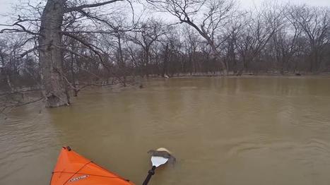 VIDEO. Un kayakiste américain sauve un écureuil de la noyade | Environnement et développement durable | Scoop.it