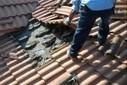 GIGANTIC BAT COLONY FOUND IN MIAMI ROOF! | Strange days indeed... | Scoop.it