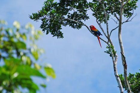 Èquateur: une forêt à l'abri des changements climatiques   Planète bleue en alerte rouge   Scoop.it