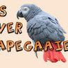 parrot_tricks