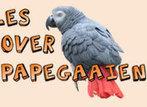 Clickertraining - Papegaaien & parkieten gedrag : plukken etc. | parrot_tricks | Scoop.it