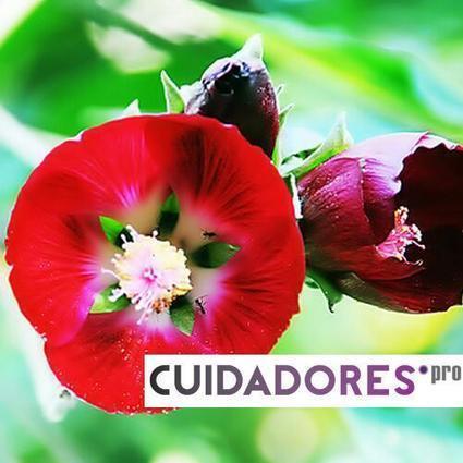 Cuidadores (CuidadoresPRO) on Twitter   Formación para cuidadores   Scoop.it