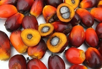 Sifca to invest $417 million in West Africa palm-oil expansion | Daraja.net | Scoop.it