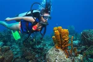 Scuba DivingSafety   All about water, the oceans, environmental issues   Scoop.it