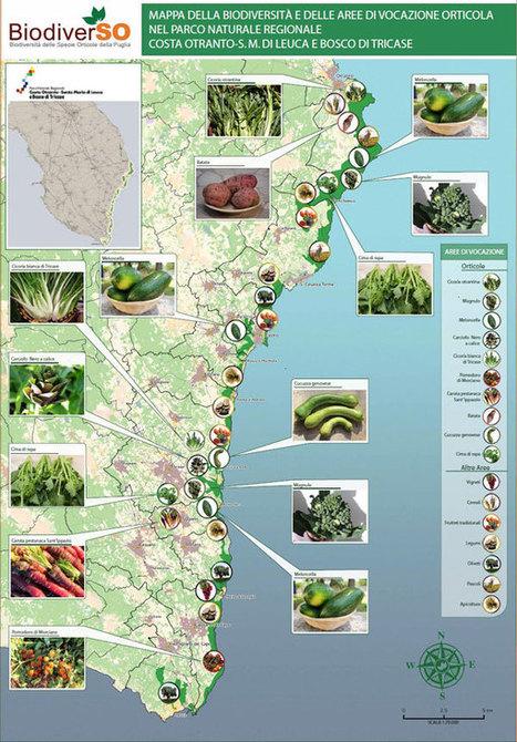 «Biodiversità prerequisito per la sicurezza alimentare»   Sicurezza alimentare   Scoop.it