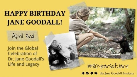 Jane Goodall's Global Birthday Celebration | the Jane Goodall Institute | Connect All Schools | Scoop.it
