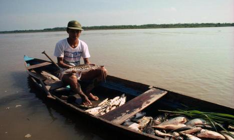 Amazon River Dolphin | Species | WWF | protecting the amazon diversity | Scoop.it