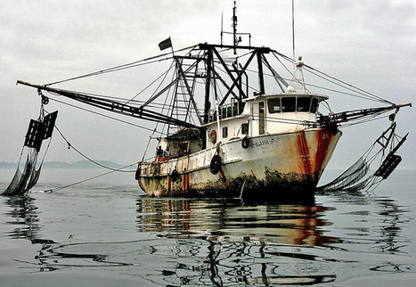 STUDY: State of play regarding application and implementation of IUU Regulation | Aquaculture and Fisheries - World Briefing | Scoop.it