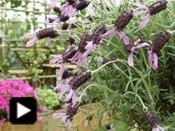 Comment aménager une terrasse ou un jardin en ville | Bricolage et décoration | Scoop.it
