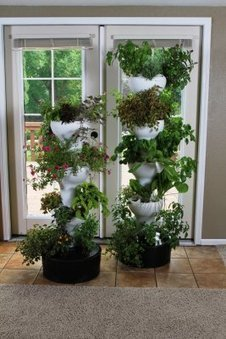 Foody Hydroponics System | Plant Based Nutrition | Scoop.it
