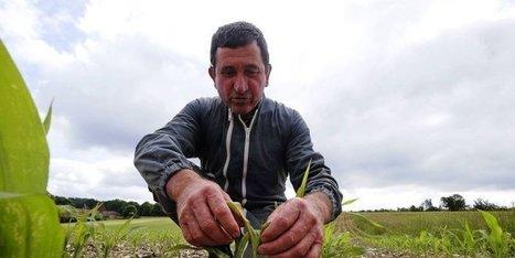 Dordogne : l'effet du mauvais temps sur l'agriculture | Agriculture en Dordogne | Scoop.it