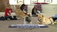 Video: Dogs really are man's best friend | Empathy and Animals | Scoop.it