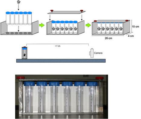 JoVE Video: Methods to Assay Drosophila Behavior   Protocols   Scoop.it