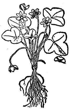 Teaching: Go Botany   Homework Helpers   Scoop.it