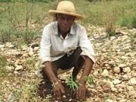 Haïti : Modèle d'autofinancement en agro-foresterie   Chuchoteuse d'Alternatives   Scoop.it