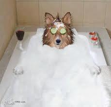 Blabberize.com - Got a picture? Blabberize it! | EZRA TAKES A BATH | Scoop.it