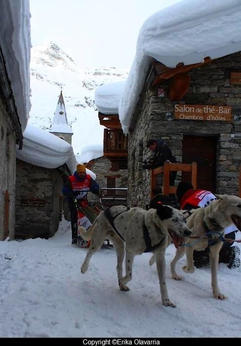 Savoie+Mont+Blanc+chiens+traineaux