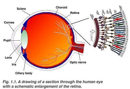Retina cells 3D printed for the first time | Amazing Science | Scoop.it