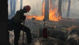 Costly lesson of Rim Fire: Forests need to be thinned - Stockton Record | Silviculture and Forest News | Scoop.it